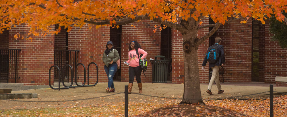 Students walk together under a beautiful tree in autumn